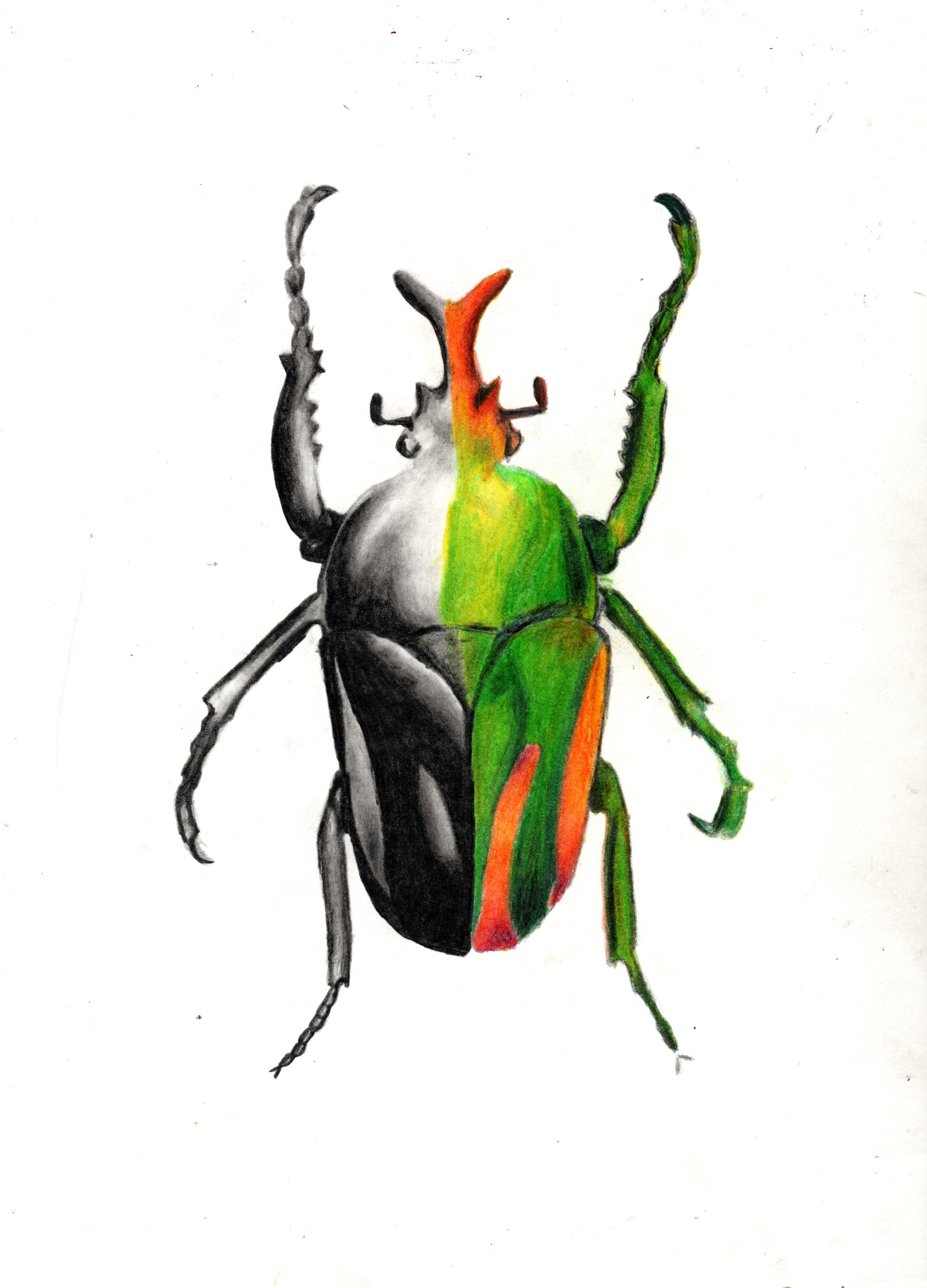 Andrew Swerz Bug Study.jpeg