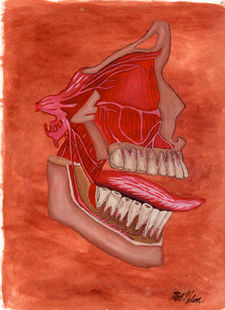 Max Medical Illustration copy.jpeg