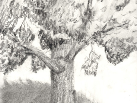 A Stroll in the Woods: Aidan Krakowski '21