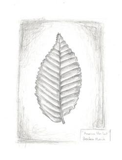 Brecken Music -Leaf.jpeg