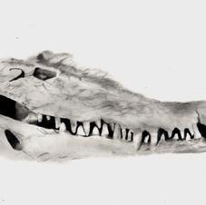 Alligator Scan