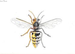 Owen Peters Bee Study.jpeg