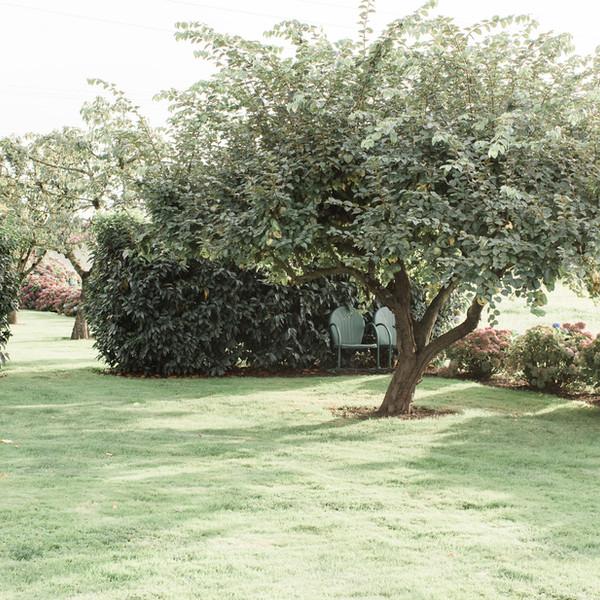Quince Tree Kassidy Woodard.jpg