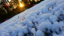 Frosty but beatiful...