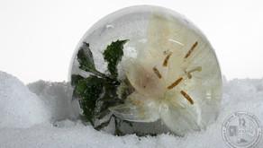 Hvordan fryse ned blomster og gjenstander.