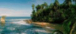 everton_palm-sun-day-manzanillo.jpg