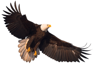 Bingo Glory Bingo Daytona Eagle