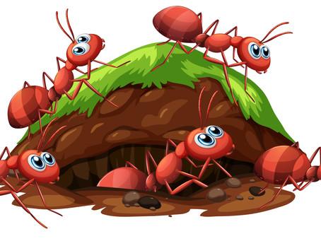 Killing ANTs My Way