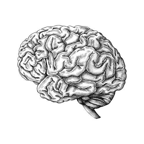 Brain Evaluation