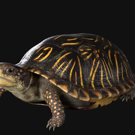 firkar-8_photorealistic_turtle.mp4