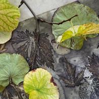 Ecoprint with Leaf