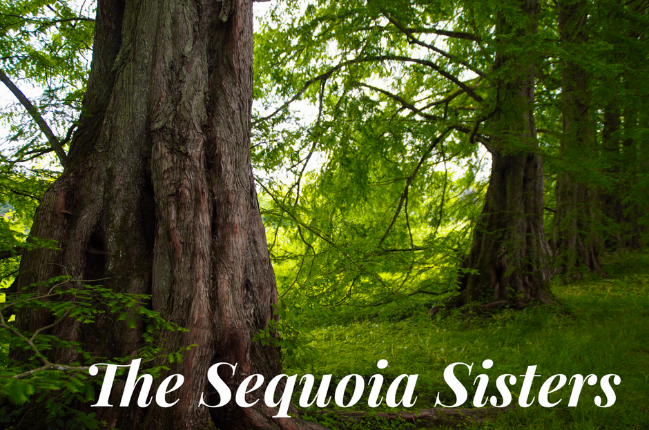 The Sequoia Sisters