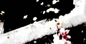 Fleurs de l'au-delà