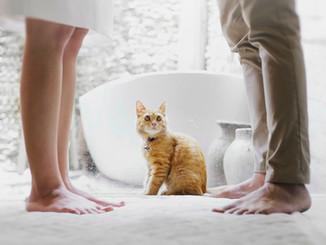 Spălăm sau nu pisicile?