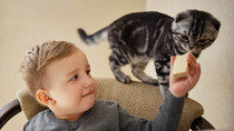 Top 10 alimente dăunătoare pentru pisica ta