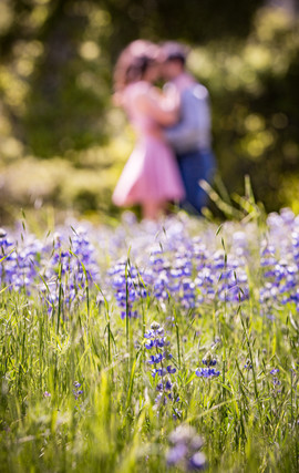 lupin flowers.jpg