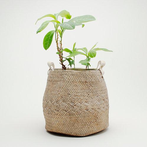 Dulton Knitting Pattern Cement Flower Pot