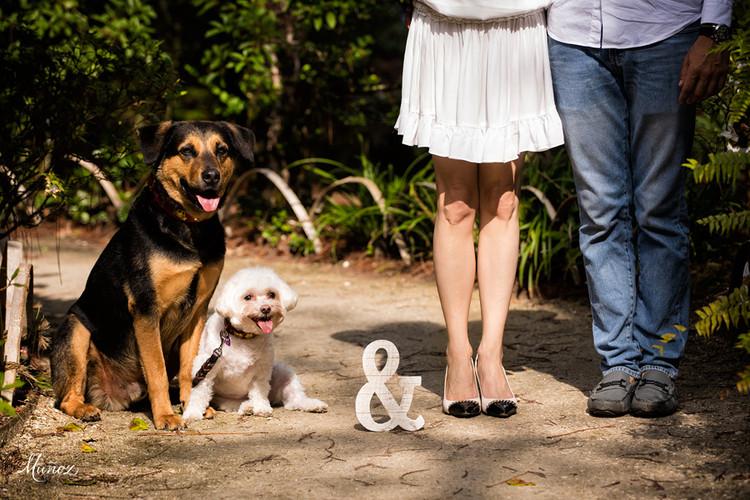 feetdogs.jpg