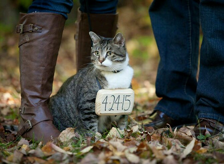 How to Purrfectly Incorporate Your Cats In Your Wedding