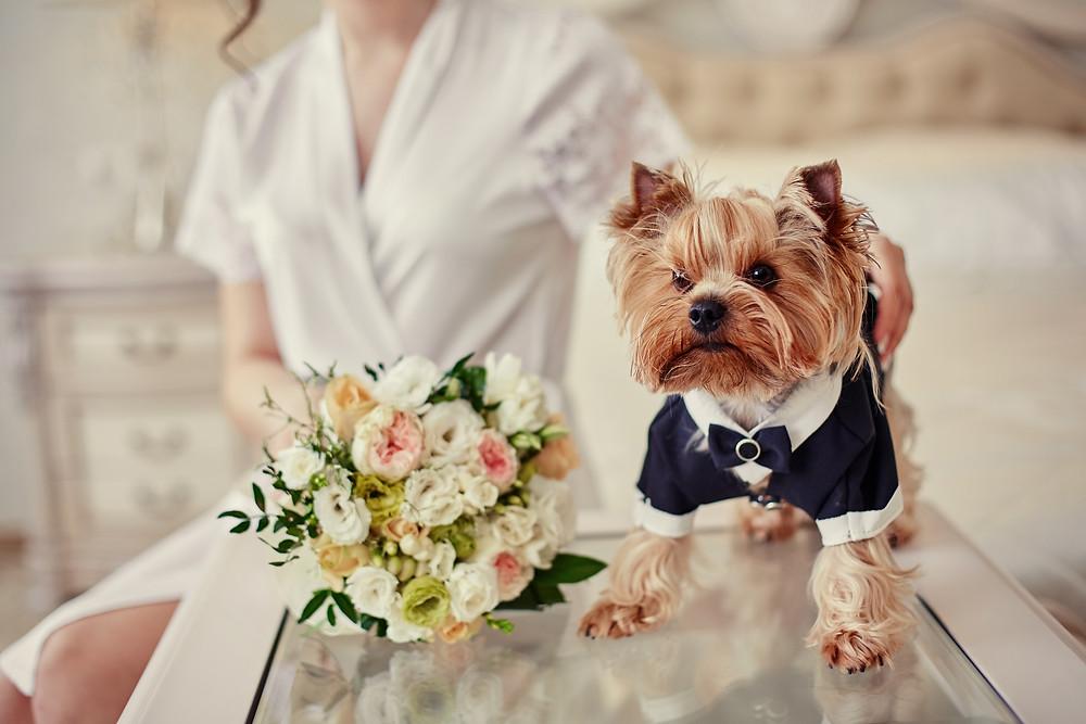 Wedding Pet