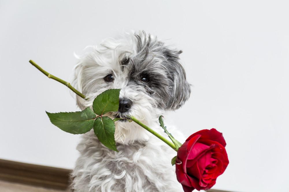 Engagement Dog