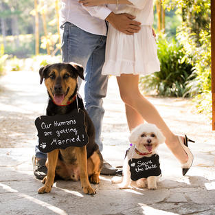 Dog Signs (personalized)