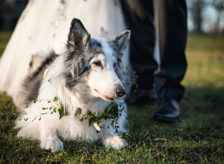 Why You Should Hire A Wedding Pet Care on Your Big Day