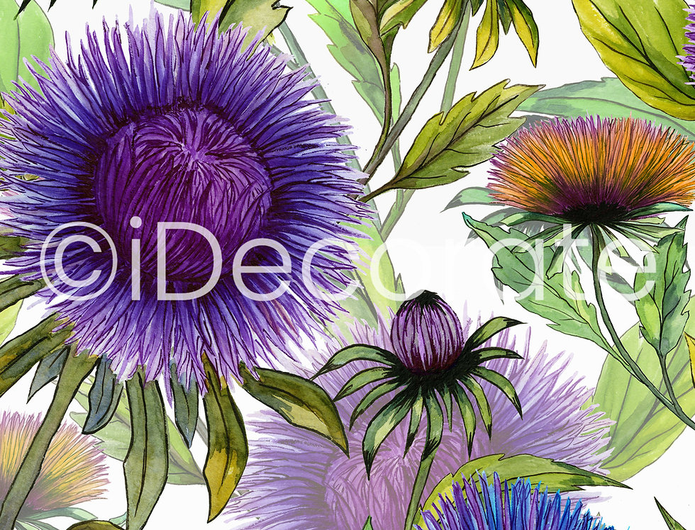 Beautiful Aster Flowers Wallpapers