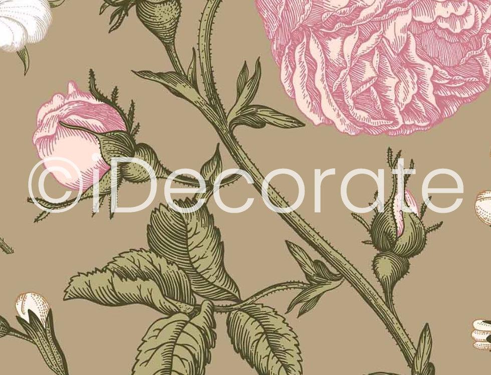 Rose Primula Wallpaper