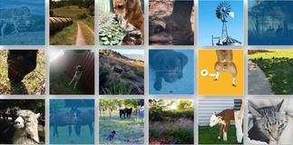 Arrowhead Animal Health - Instagram Feed Composition
