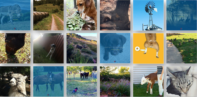 Arrowhead Animal Health - Instagram Feed Composition