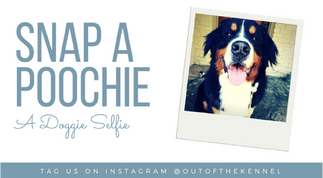 Out of the Kennel - Social Media Engagement Post