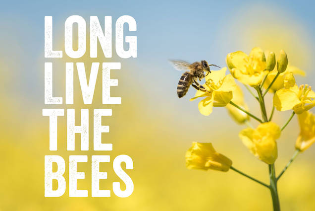 Nature Nate's - Long Live the Bees graphic