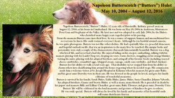 Napoleon Butterscotch Hulet