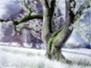 frêne en Morvan