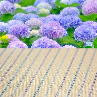 《紫陽花》