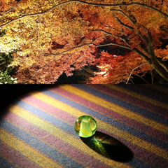 ≪夜紅葉≫