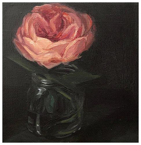 Old Paris Rose