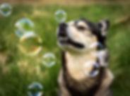 MJH_3024-100_Bubbles2.jpg