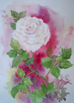 A Rose in Scarlet