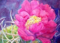 """""""Prickly in Pink"""" ©"""