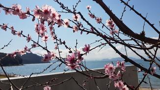 33_JAPAN 2: 21.03.-01.04.2019