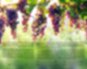 Ketuba 1 Hanging Grapes.jpg