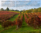 Ketubah 14 Fall Vineyard low.jpg