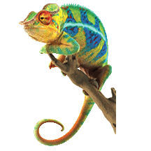 mColor_lizard.png