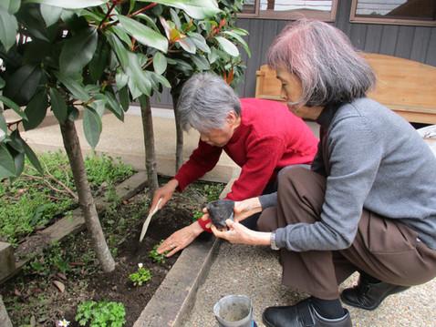 花壇の植え替え🌼でリフレッシュを!