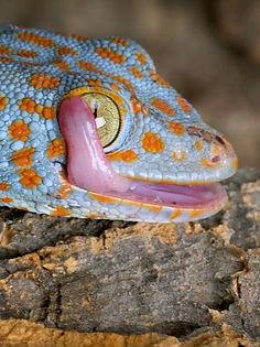 lizard_10_edited_edited.jpg