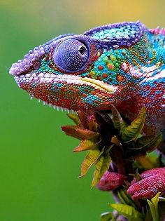 lizard_05_edited.jpg
