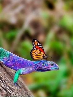 lizard_06_edited.jpg