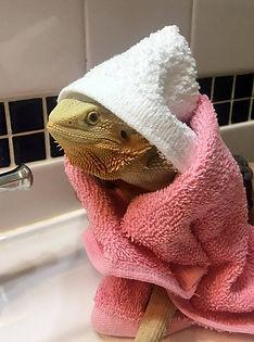 lizard_02.jpg